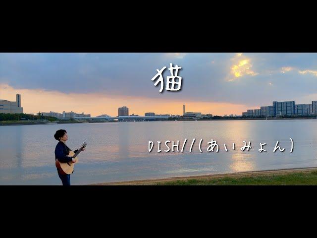 猫 / DISH// feat. あいみょん (acoustic cover)