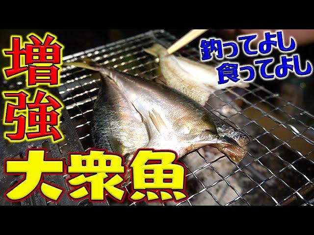 天日干し魚野外料理!前回の続きでピコグリルに日干し女王様と大衆魚を食らう!