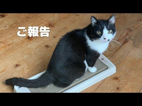 【ご報告】我が家の老猫の病気についてお知らせです