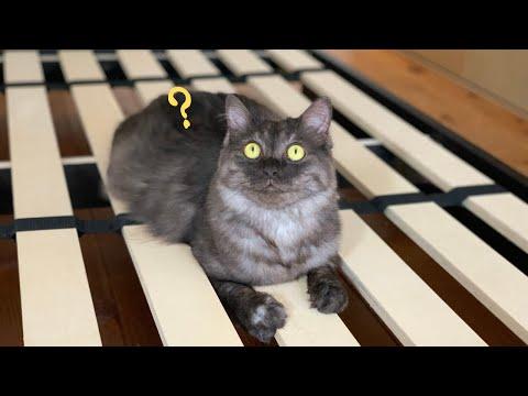 布団を干したら猫たちの遊び場になってしまった時の様子がコチラです【保護猫】