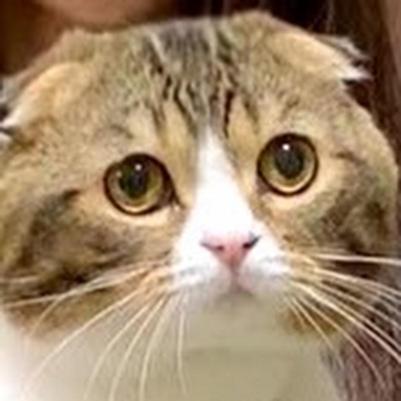 スコスコぽこ太郎&うま次郎〜猫ちゃんねる〜