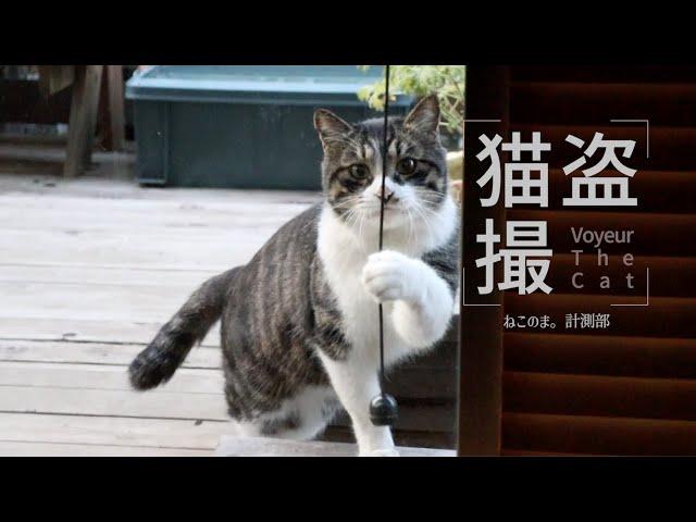 【第二弾】地域猫さんに気づかれるまで盗撮してみた