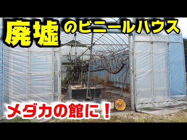 メダカ御殿【廃墟のビニールハウスを大変身!新企画!】