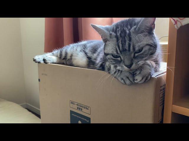 猫にとって段ボール箱は夏はひんやり、冬はあったかな最高のベッドです。