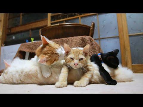 もふもふと子猫たち 210926