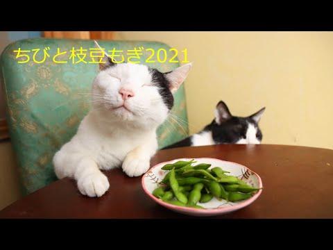 ちびと枝豆もぎ 210927