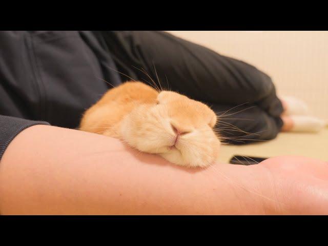隣で寝ていると甘えたウサギがやってきて腕の中でこうなります【No.564】