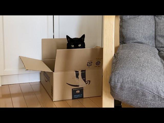 黒猫と猫じゃらしで遊んでいたら…【保護猫】【元野良猫】