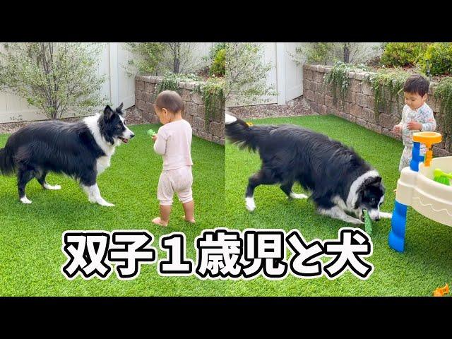 【アメリカ生活】犬との遊ぶ双子♡ 双子育児|3児ママ|国際結婚