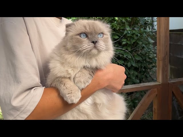 何度も脱走を試みる猫を思い切って外に出してみました