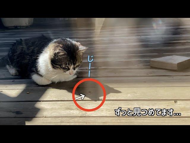 猫と、ハエ? 【地域猫】