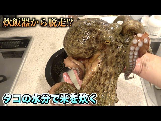 大脱走!!タコの水分で米を炊こうとした結果wwwww