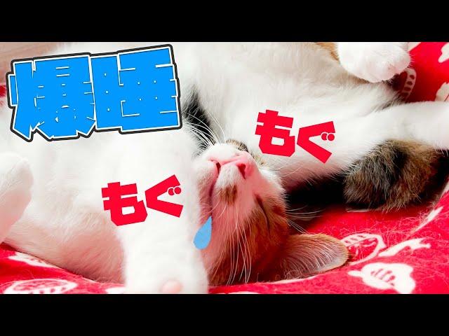 爆睡中に夢の中でもご飯を食べてる子猫が可愛すぎるwwww