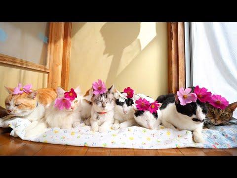 コスモスをのせた猫たち 211014