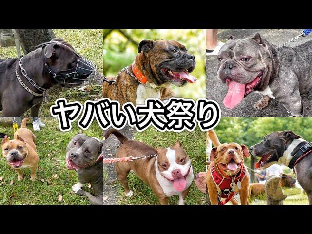【犬のイベント】最強な犬が大集結したらヤバすぎた‼︎