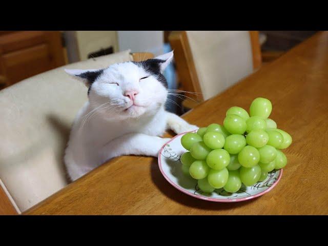 テーブルの上のシャインマスカット シャインマスカットをのせたうずまき 211015