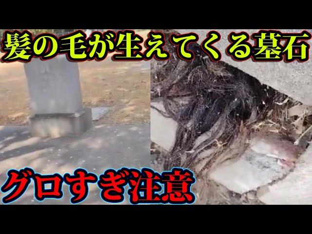 墓の中から髪の毛が伸びてくる理由がヤバすぎる。