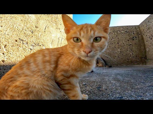防波堤の下にいた子猫がカワイイ