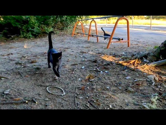公園で猫が駆け寄って来た