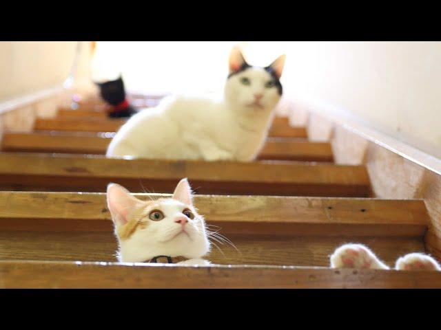階段でビー玉で遊ぶ子猫たち 211016