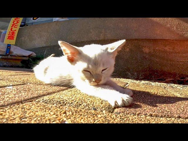 通りで寝転ぶ子猫が可愛過ぎる