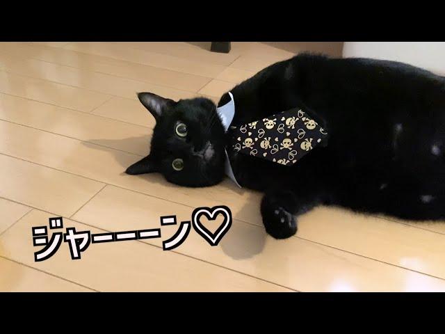 黒猫とハロウィン【元野良猫】【保護猫】