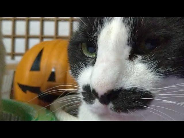 かご猫LIVE配信 211016