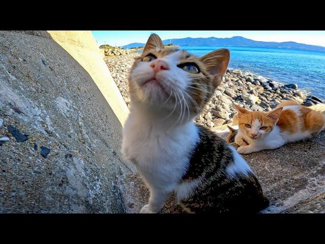 海辺の野良猫たちの食後の昼寝の時間にお邪魔しました