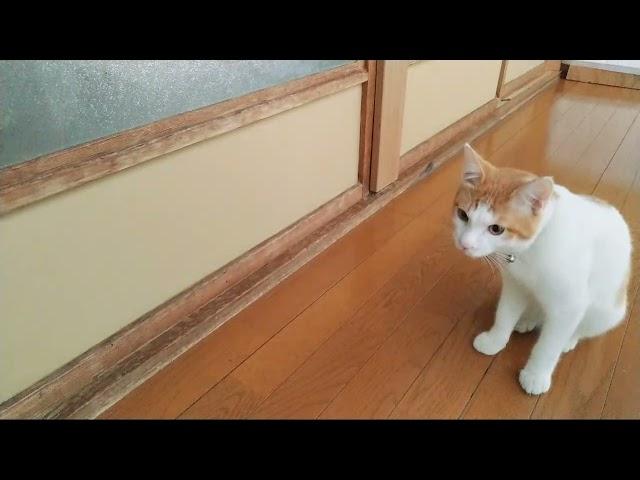 かご猫LIVE配信 211015 のハイライト 11:36:38 - 11:41:38