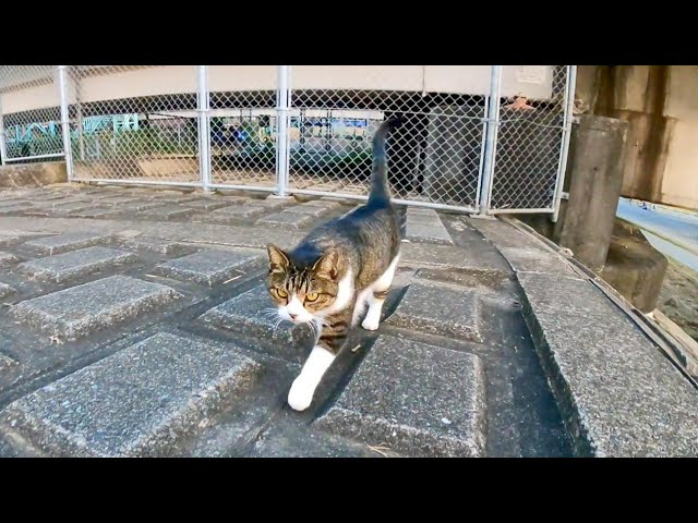 河川敷の野良猫がモフられに出てきた