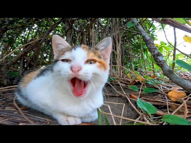 草むらに隠れていた子猫の三毛猫がカワイイ